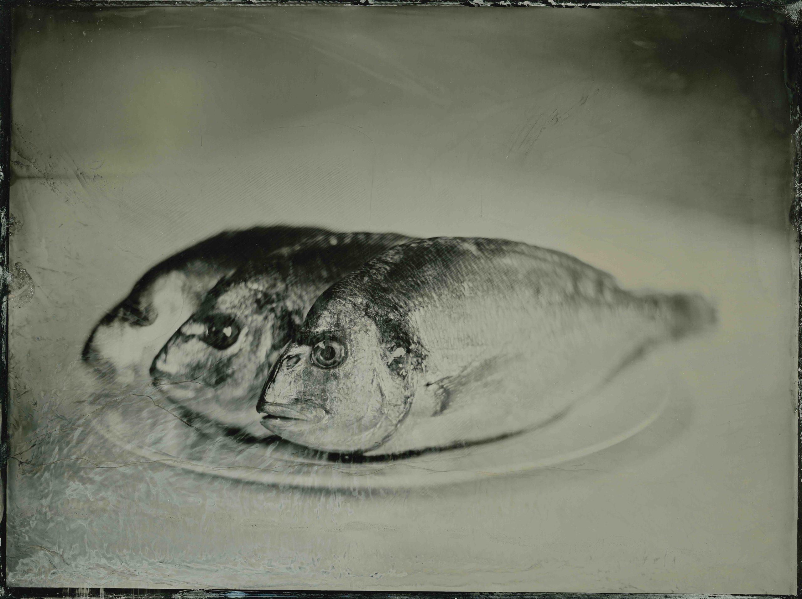fishonaplate
